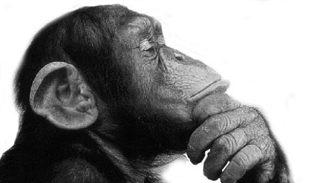A chimpanzee deep in thought